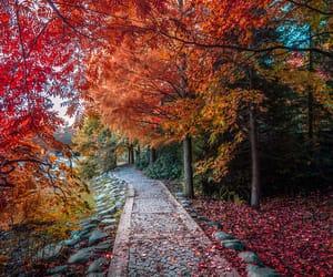 autumn, landscape, and instanbul image