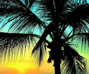 holidays, palme, and sonnenuntergang image