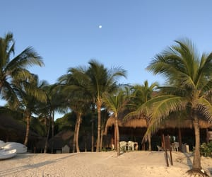 beach, happiness, and mexico image