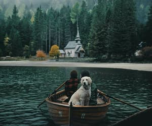 dog, nature, and photography image