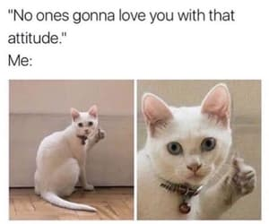 funny, meme, and attitude image