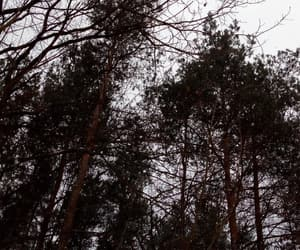 winter, forest, and aestetic image