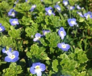 blue, spring, and lockscreen image