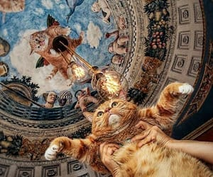 cat, animal, and art image
