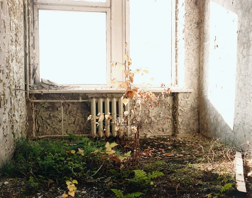 abandoned, green, and house image
