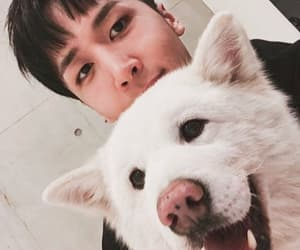 dogs, ken, and kpop image