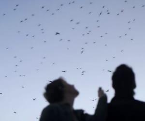 sky, birds, and blue image