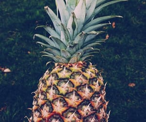 leaf, nature, and pineapple image