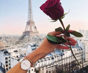 paris, rose, and travel image