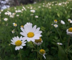 bio, daisy, and fleur image