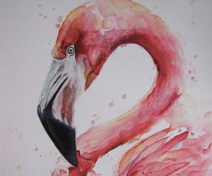 flamingo, water color, and art image