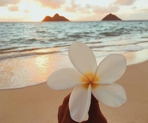 beach, flower, and sea image