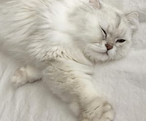 cat, aesthetic, and soft image