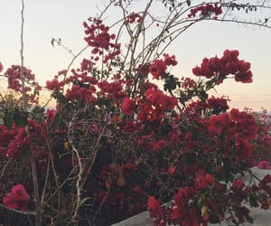 pink, roses, and sunset image