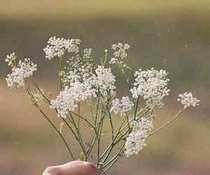 aesthetic, flower, and babybreath image