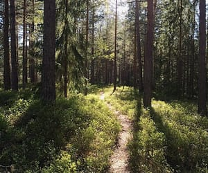 forest, inspiration, and nature image