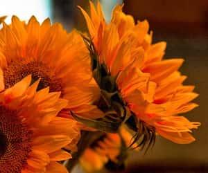 flowers and orange image