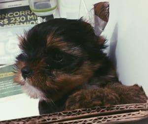 animal, cachorro, and dog image