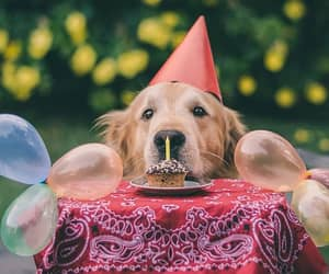 animals, birthday, and cute dogs image