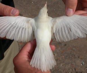 bird, white, and aesthetic image