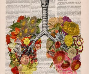 art, flowers, and lungs image