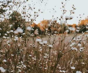 flower, aesthetic, and brown image