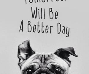 dog, pug, and quotes image