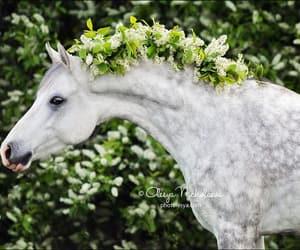 dapple, flowers, and gray image