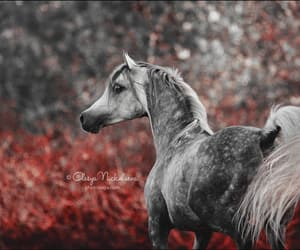 arabian, grey, and autumn image