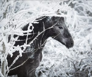 gray, horse, and snow image