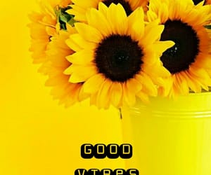 flowers, Sunday, and sunflowers image