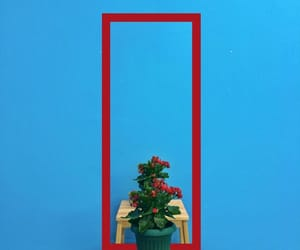blue, flower, and table image