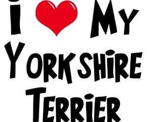 i, ❤, and ️my yorkshire terrier image