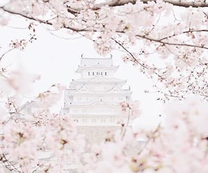 baby pink, destination, and tree image