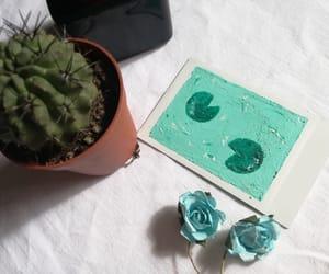 blue, succulent, and cactus image