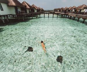 Maldives, paradise, and summer image