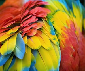 bird, feather, and colorful image