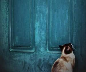 cat, door, and blue image