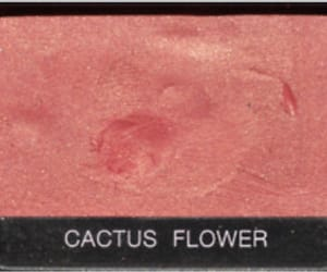 cactus and flower image