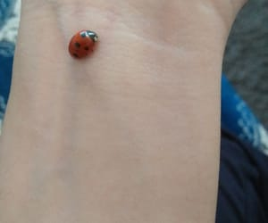coccinelle, lady bug, and lovely image