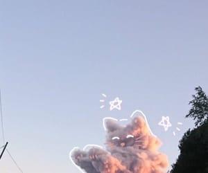 cat, pretty cat, and cloud image