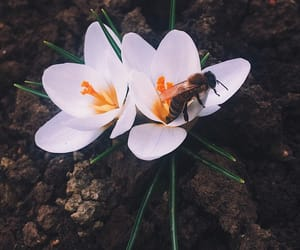 bee, green, and flower image