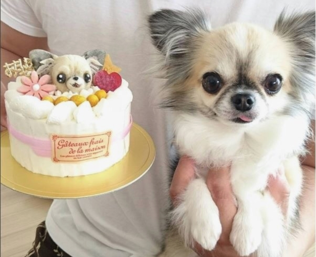 Astonishing Chihuahua Birthday And Cake Wonderful Doggie Birthday Funny Birthday Cards Online Unhofree Goldxyz
