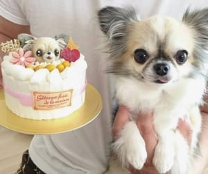 birthday, dog, and cake image