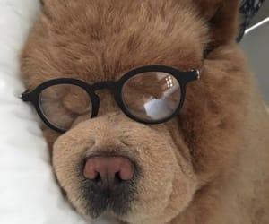 animals, bed, and big dog image