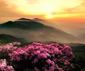 beautiful, flowers, and inspiration image