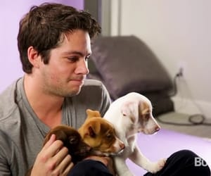 actor, puppies, and dylan o'brien image