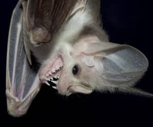 Darkness, white, and fly bat image