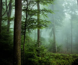 fog, forest, and landscape image