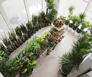 green, greenery, and greenhouse image